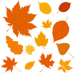autumn yellow and orange leaves on white background