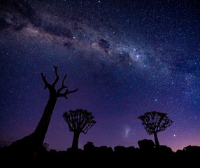 The Milky Way shines over quivertrees