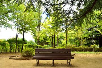 初秋の公園のベンチ
