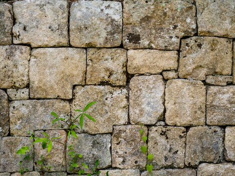 Interlocking stone wall of a Mayan temple in the Mexican jungle