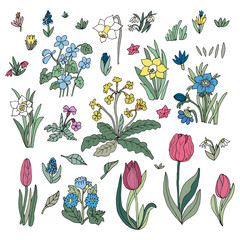 Flowers collection set. Design for greeting cards. Cute floral c