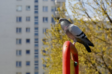 The pigeon is sitting on a steel structure