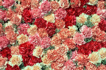 Colorful carnation flowers background. Top view
