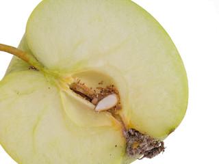 Codling moth larva, Cydia pomonella grub, larva. Caterpillar in apple, white background.