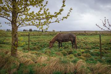 horse on the rain