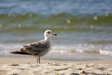 Sea shore and there is lonely gull