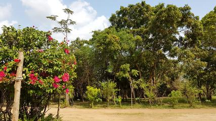 Sri Lanka Lodge Flowergarden