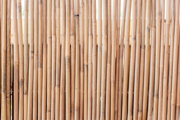 Bamboo fence texture background in beautiful summer light