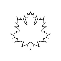 maple leaf. vector icon