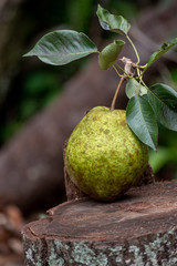 fresh picked pear on wood stump outdoors