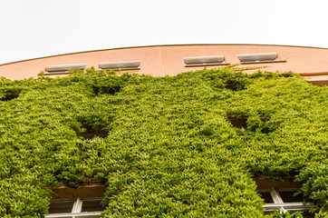 Low Angle View of Ivy Growing on Building in Berlin, Germany