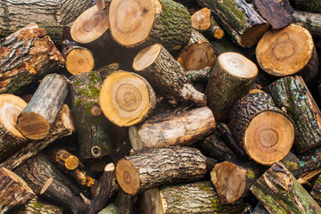 Woodpile of chopped lumber. Pile of wood logs. Stacked firewood timber
