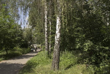 Birch and path with people.