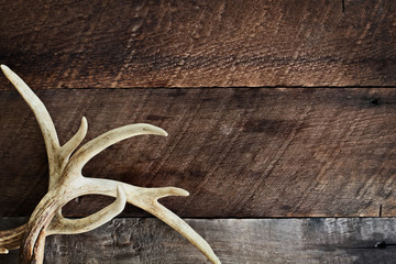 Foto op Aluminium Jacht Deer Antlers