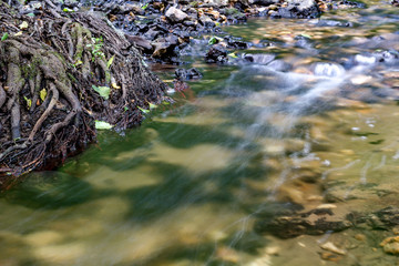 The roots of a tree in a forest stream. Stream Repinka in the city of Obninsk, Russia