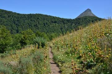 Puy Griou, GR 400, Auvergne, France