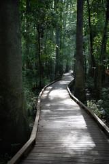 Sunny boardwalk through forest