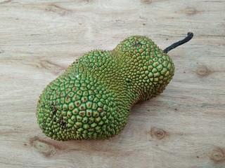 the jackfruit, a tropical fruit