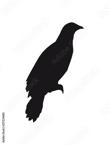 Rabe Sitzend Silhouette Schwarz Umriss Schatten Adler Falke Taube