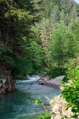 Creek running through trees