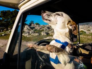 Perro Jack Russell en autocaravana.Cazorla. Parque natural en Jaen, Andalucia, España