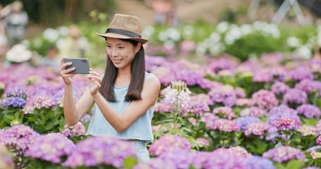 Woman taking photo on cellphone in Hydrangea garden