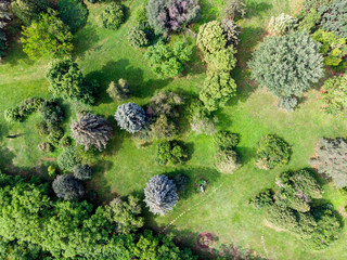 birds eye view of summer park landscape. natural background. aerial view of city park