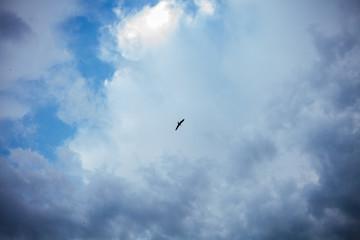 beautiful sky and bird, clouds