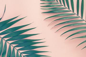 Palm leaves over pink background. Trend vintage toned.