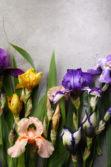 Concrete gray background with iris flowers