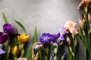 Concrete background with iris flowers