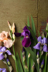 Green wooden background with iris flowers