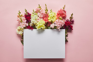 top view of beautiful tender fresh flowers and blank card on pink
