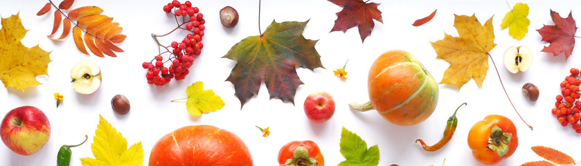 Banner of autumn yellow, orange and red maple leaves, vegetables and fruits isolated on white background, top view, flat layout.