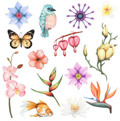 Watercolor set with exotic  flowers and animal element. Hand drawn illustration on  white background  isolated