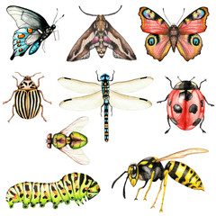 Big set of watercolor insects on a white background isolated