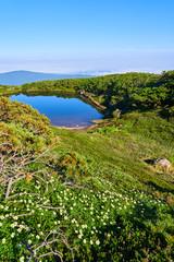 チングルマの咲く大雪山 旭岳 満月沼