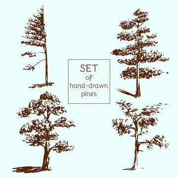 Set of hand-drawn pines. Sketch design