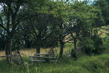Green trees growing along a broken old wooden rural fence on a summer evening at twilight