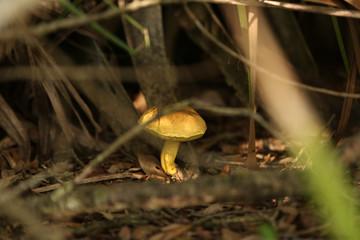 Mushroom growing in the woods