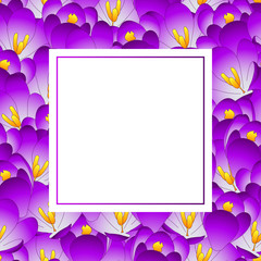 Purple Crocus Flower Banner Card