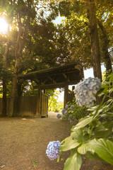 Rikugien Garden's interior door in Tokyo made of wood and tiles and purple hydrangeas in the sun's rays.