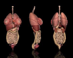 内臓システム方位別一覧(女性)
