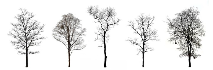Collection of trees without leaves isolated on white background Wall mural