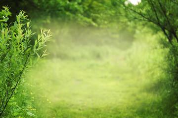 Summer or spring nature background, frame