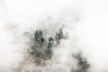 Trees in the white clouds
