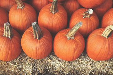 Pile of Pumpkins with Hay