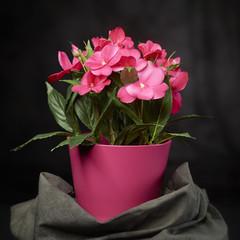 Blumenstraus im Topf