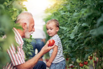 Grandfather and his grandson in a greenhouse.