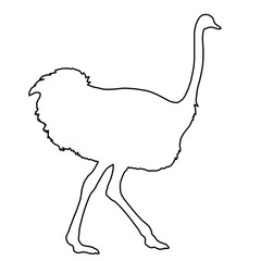 Ostrich running of black contour curves on white background. Vector illustration.